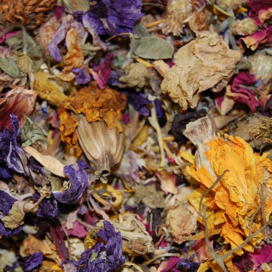 Chinchilla Blütenratatouille
