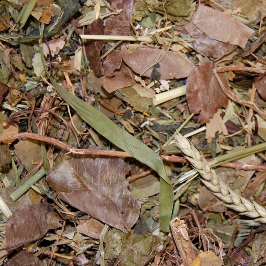 Degu Blätter- & Blütensalat