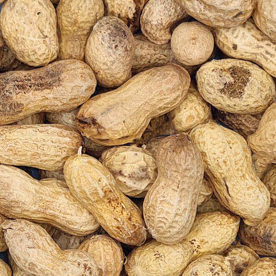 Erdnüsse, in der Schale