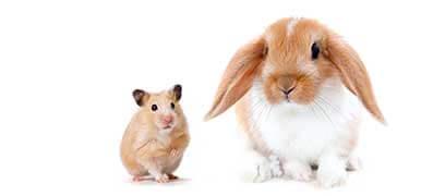Ergänzungsfutter für Nager und Kaninchen