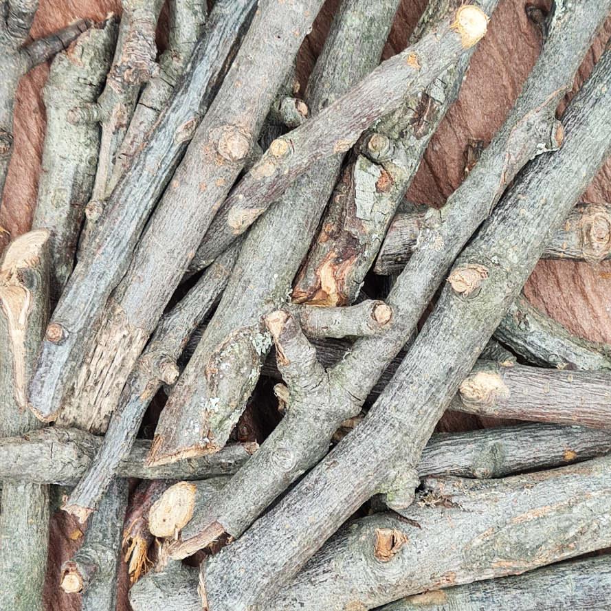 Knabberholz vom Birnenbaum
