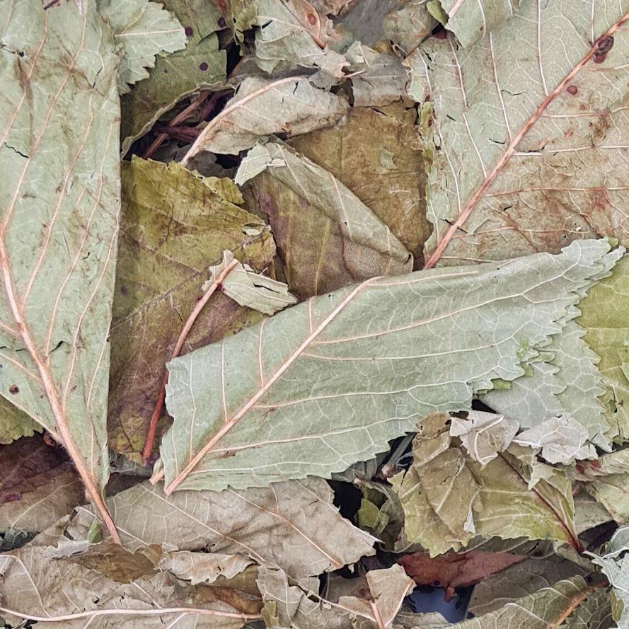 getrocknete Kirschblätter