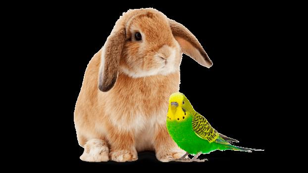 Kaninchen und Wellensittich