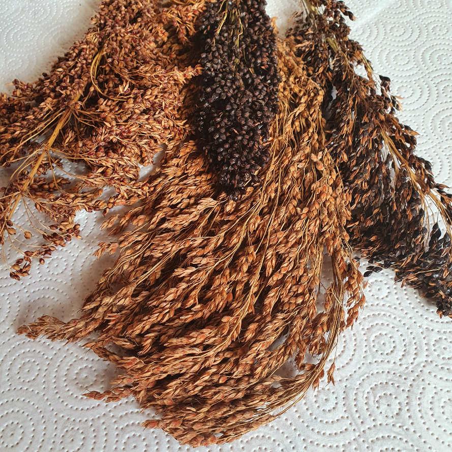 Schelli ist ein Mix aus Sorghum und Sudangras